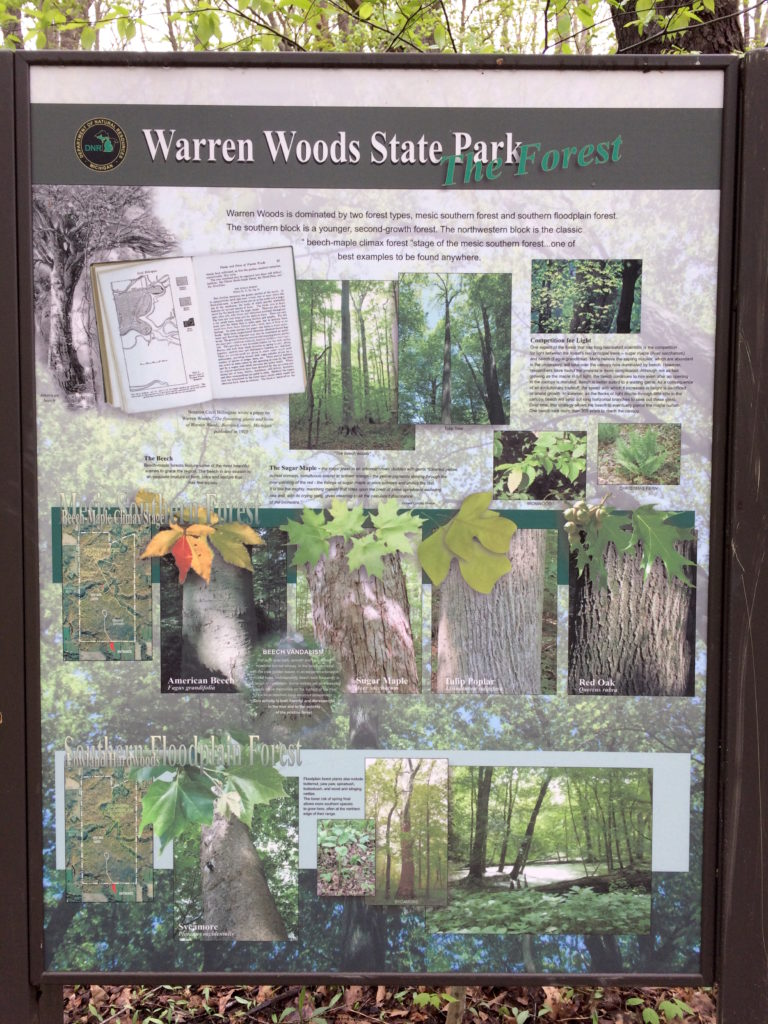 Sign at Warren Woods State Park about the trees in this forest New Buffalo Michigan